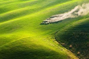 Pasturage by Marcin Sobas