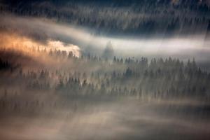 Raven by Marcin Sobas
