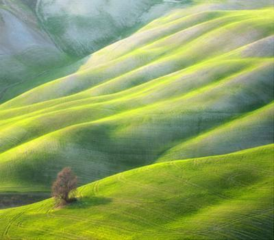 Red Tree by Marcin Sobas