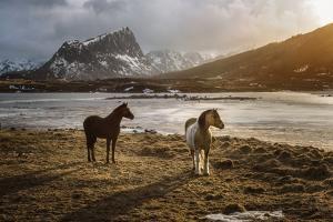 Lofoten Horses by Marco Carmassi
