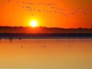 Migratory Birds by Marco Carmassi