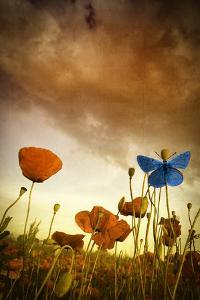 Poppies Dream by Marco Carmassi