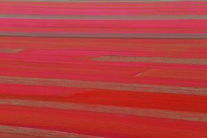Red Land by Marco Carmassi