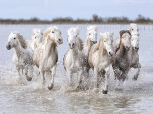 Running Wild Horses by Marco Carmassi