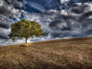 Solitary Tree by Marco Carmassi