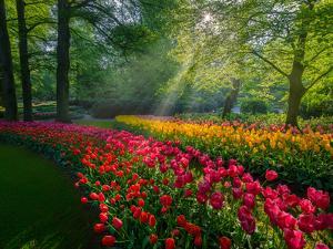 Special Garden by Marco Carmassi