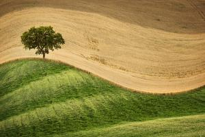 Tree on the Hill by Marco Carmassi
