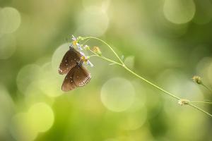 Twin Butterfly by Marco Carmassi