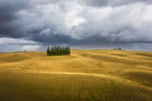 Wheat and Cypresses in Tuscany by Marco Carmassi