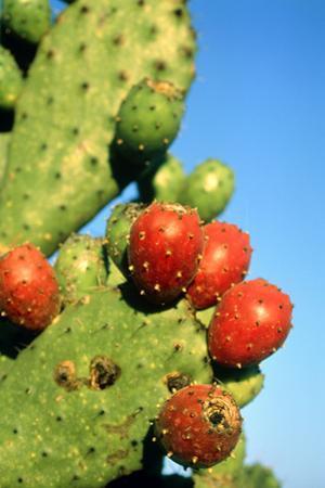 Cactus, San Miguel De Allende, Guanajuato, Mexico