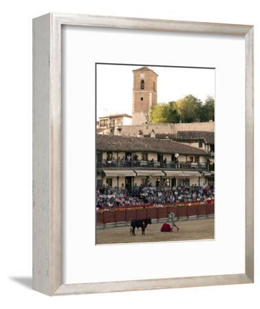 Young Bulls in the Main Square Used as the Plaza De Toros, Chinchon, Comunidad De Madrid, Spain