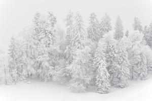Snowy Firs, Switzerland, St. Gallen, Hemberg by Marco Isler