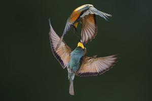 Fight Between Rainbows by Marco Redaelli