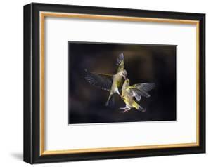Flying Kiss 11 by Marco Redaelli