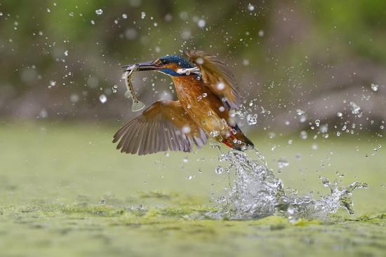 marco-redaelli-green-fishing