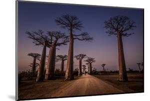 Allace des Baobabs by Marco Tagliarino