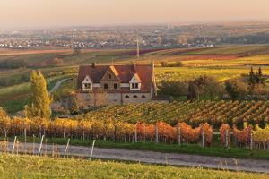 Winery in the Vineyards in Autumn at Sunset by Marcus Lange