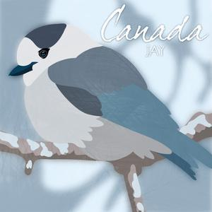 Canada Jay by Marcus Prime