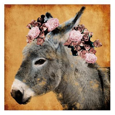 Pretty Donkey by Marcus Prime