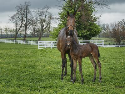 Mare and Foal 2-Galloimages Online-Photographic Print