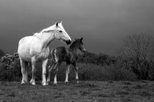 Mare and Foal, Co Derry, Ireland