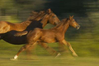 Mare Running with Colt-DLILLC-Photographic Print