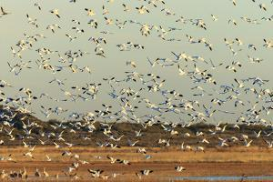 Bosque Del Apache National Wildlife Refuge, New Mexico by Maresa Pryor