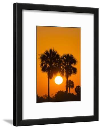 Cabbage Palms at Sunrise, Florida Bay, Everglades NP, Florida, Usa