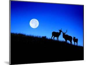 Full Moon, Super Moon, Yellowstone National Park, Wyoming by Maresa Pryor