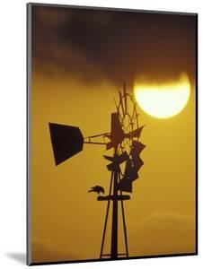 Harris Hawk Eating Prey on Windmill at Sunset, Brooks County, Texas, USA by Maresa Pryor