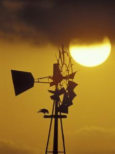 Harris Hawk Eating Prey on Windmill at Sunset, Brooks County, Texas, USA by Maresa Pryor