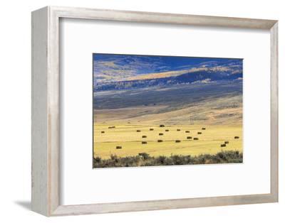 Hay Fields Outside of Steamboat Springs, Colorado