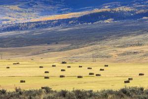 Hay Fields Outside of Steamboat Springs, Colorado by Maresa Pryor