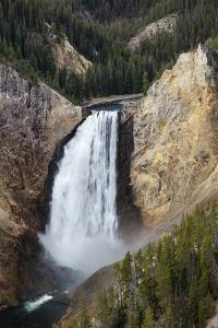 Lower falls from Lookout Point, Yellowstone National Park, Wyoming, USA by Maresa Pryor