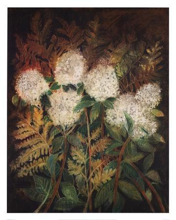 Hydrangeas and Ferns
