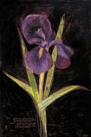 Twilight Iris