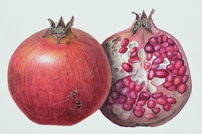 Pomegranate, 1995