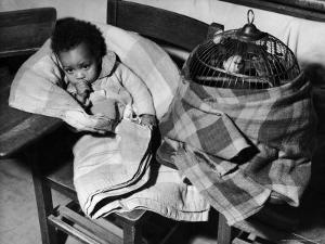 African American Baby Next to Cage of Canaries in a Shelter at School During Severe Flooding by Margaret Bourke-White
