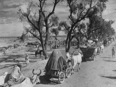 Convoy of Sikhs Migrating to East Punjab After the Division of India