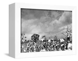 Cotton Picking Machine Doing the Work of 25 Field Hands on Large Farm in the South by Margaret Bourke-White