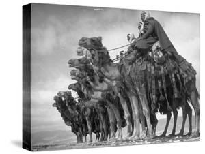 Meharists Commanded by Officers of French Expeditionary Force, Posing in Desert Near Damascus by Margaret Bourke-White