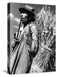 Peasant Field Worker Carrying a Bundle of Wheat by Margaret Bourke-White