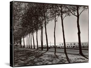 Tree Lined Street Along the Shore of Beautiful Shores of Lake Balaton by Margaret Bourke-White