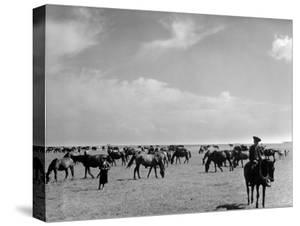View of Horses Grazing on the Flat Hungarian Plains That Pastures Some 90,000 Horses by Margaret Bourke-White
