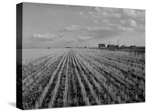 Wheat Fields by Margaret Bourke-White