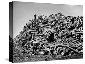 Worker on Top of Pile of Pine Logs Outside Union Bag and Paper Co. by Margaret Bourke-White