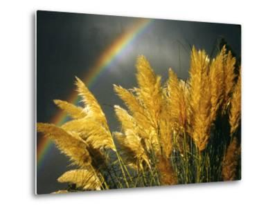 Pampas Grass and Rainbow, Sedona, Arizona, USA