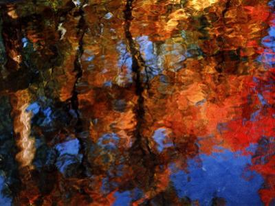 Reflection of Red Maples and Blue Sky in Creek, Sedona, Arizona, USA