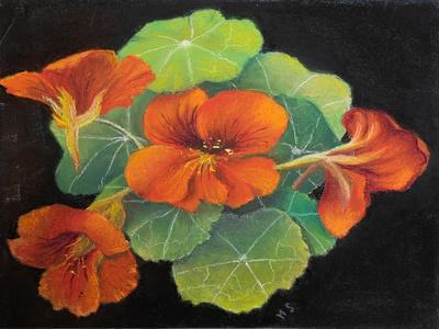 Nasturtiums,  pastel