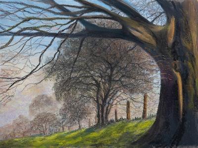 Windblown treesShroesbury,  pastel